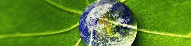 gota sobre folha de árvore com imagem do globo