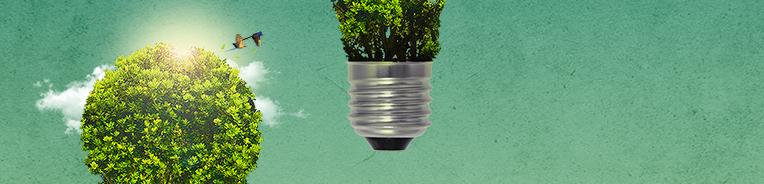 imagem conceito de lampada de onde nasce arbusto, com passaros voando